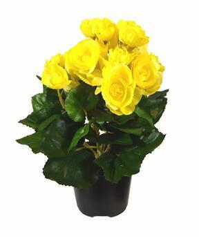 Umetna rastlina Begonia rumena 25 cm
