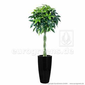 Pachira umetno drevo 150 cm