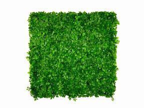 Umetna listna plošča Fikus Microcarpa - 50x50 cm
