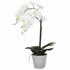 Umetna orhideja bela 65 cm