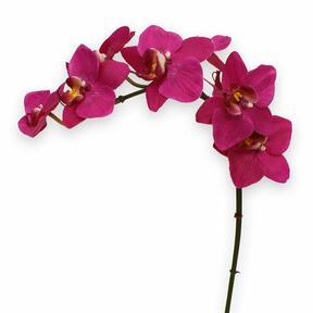 Umetna rastlina Orhideja vijolična 80 cm