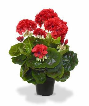 Umetna rastlina Pakost rdeča 40 cm