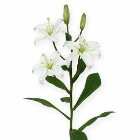 Umetna veja Lilija bela 50 cm