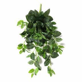 Umetna vitica Fitónia zelena 80 cm