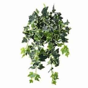 Umetna vitica Ivy belo-zelena 80 cm