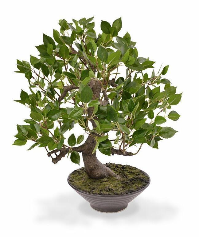 Umetni bonsaj Fikus Wiandi 45 cm